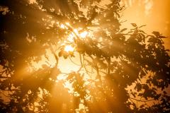 Golden-Sunrise
