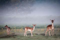 Three-Deers